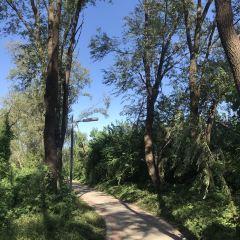 柳樹灣濕地公園用戶圖片