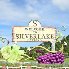 Silverlake Vineyard User Photo