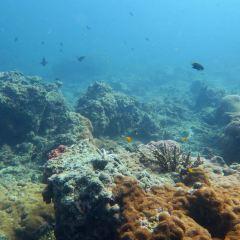 Merlin Divers - Kamala Diving Center User Photo