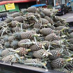Fruit Garden User Photo