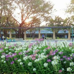 Hongcheng Park (East Gate) User Photo
