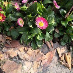 Guzhuang Ecological Garden User Photo