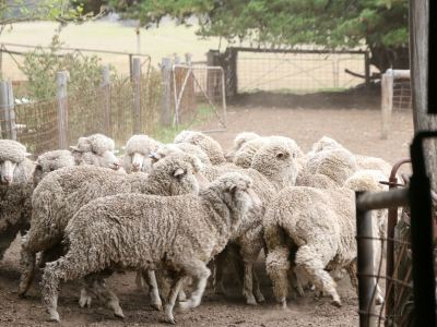 Australian Woolshed