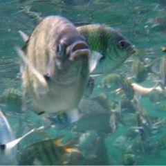 海洋公園 用戶圖片