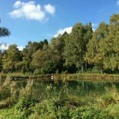 維施琳根森林公園用戶圖片