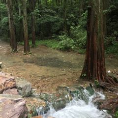 Nine Creeks in the Misty Forest User Photo