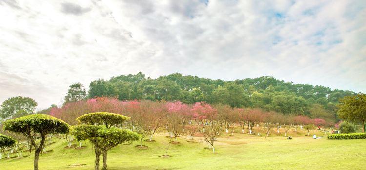 Shimen Forest Park