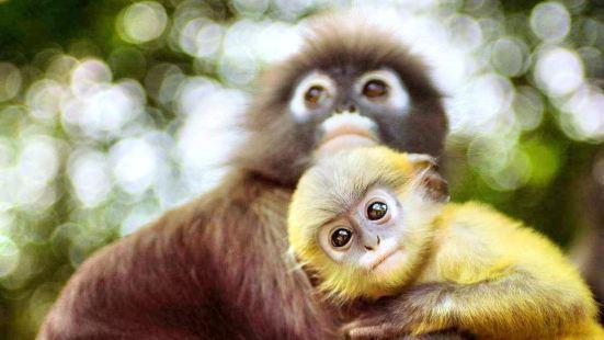 Chiang Mai Monkey Centre