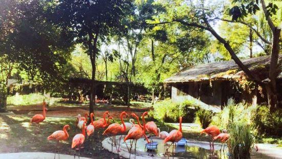 Children Zoo