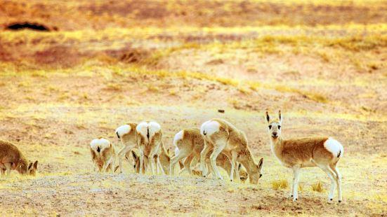 可哥西裡藏羚羊觀景台
