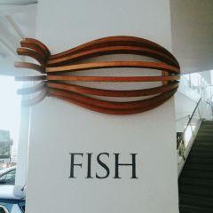 Fish User Photo