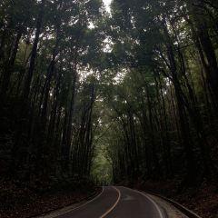 Mahogany Forest User Photo