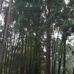 Forest Research Institute of Malaysia User Photo