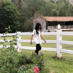 The Scenery Vintage Farm User Photo