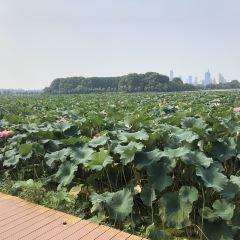 玄武湖のユーザー投稿写真