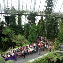 Cloud Forest User Photo