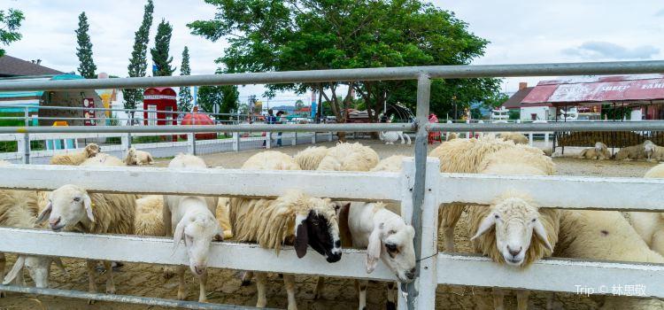 華欣瑞士綿羊牧場2