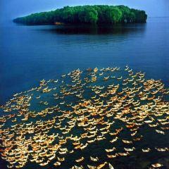 洞庭湖用戶圖片