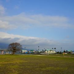 海豚港用戶圖片
