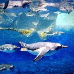 Kelly Tarlton's Antarctic Encounter & Underwater World User Photo
