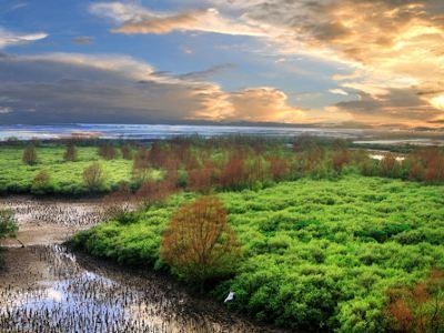 湛江マングローブ国家級自然保護区