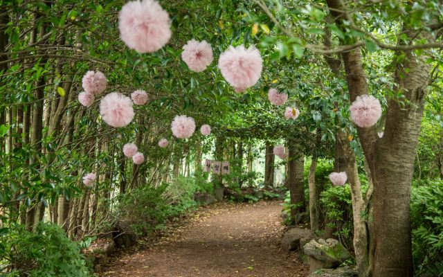 又到一年繡球花開時節,快來濟州島看花海吧!