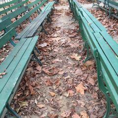金門公園用戶圖片