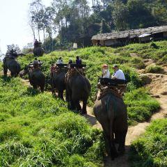 Maesa Elephant Camp User Photo