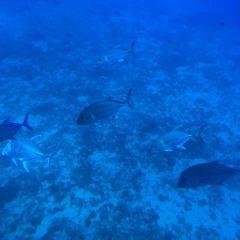 아틀란티스 잠수함 여행 사진