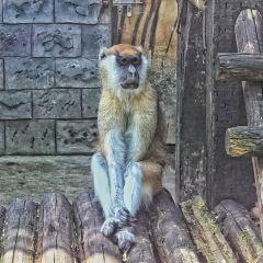 Yancheng Wild Animal World User Photo