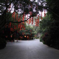 雁南飛茶田のユーザー投稿写真