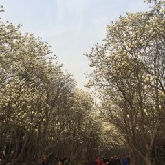 Baihua Park  User Photo