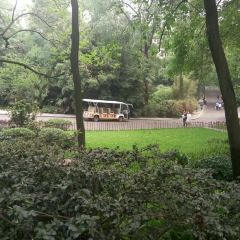 청두 판다 생태원 관광 박물관 여행 사진