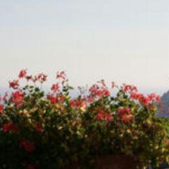 辛波乃別墅用戶圖片