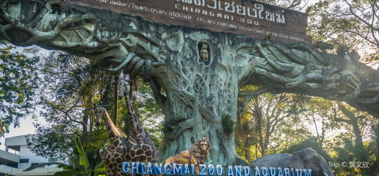 치앙마이 동물원1