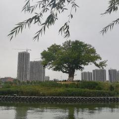 孔雀河用戶圖片