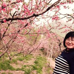 Peach Blossom Sea User Photo