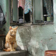 氹仔村用戶圖片