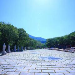 Mingguang Temple User Photo