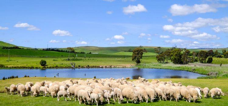 Curringa Farm1