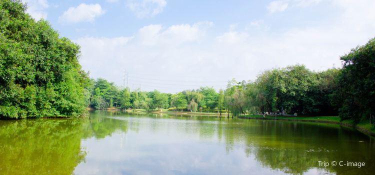 Longtoushan Forest Park3