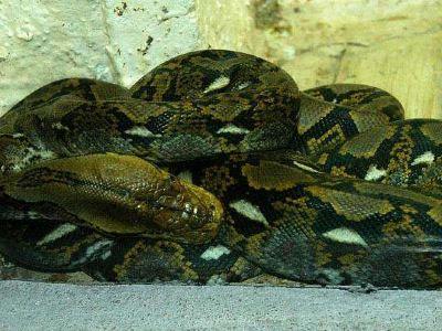 蛇類自然博物館