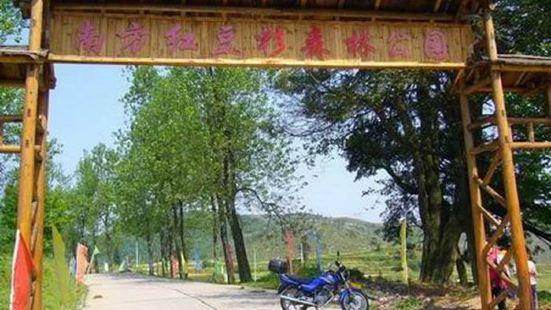 Nanfang Hongdoushan Forest Park