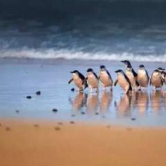 菲利普島自然公園用戶圖片