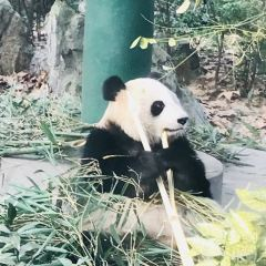 Chengdu Zoo User Photo