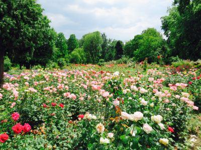 The Botanical Garden (Gradina Botanica)