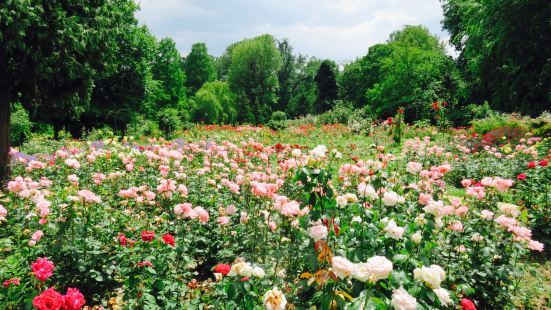 The Botanical Garden (Gradina Botanica)
