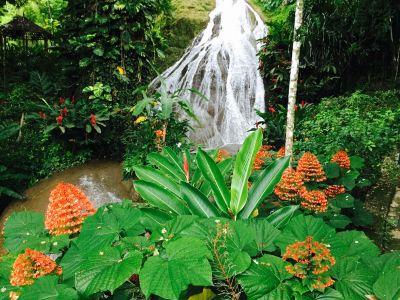 Shaw Park Gardens & Waterfalls