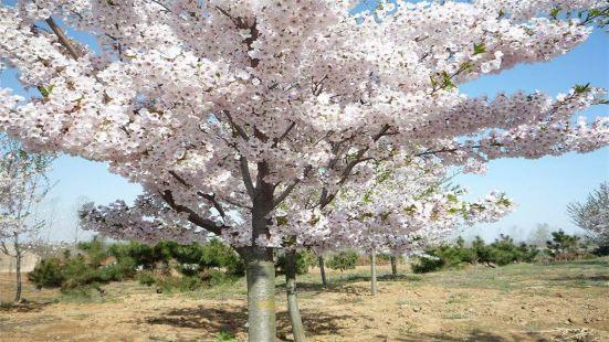 岳陽櫻花園