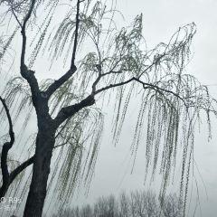 Slender West Lake User Photo